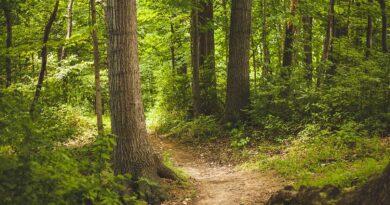 National Forest System Trail StewardShip Partnership Funding program